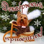 Закачать мерцающие картинки декабрь
