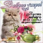 Доброе утро картинка с котом и надпись