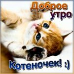 Доброе утро котенок открытка