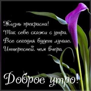 доброе утро, пожелание счастья, позитива на день, утренняя улыбка, чудесного настроения, приятная картинка
