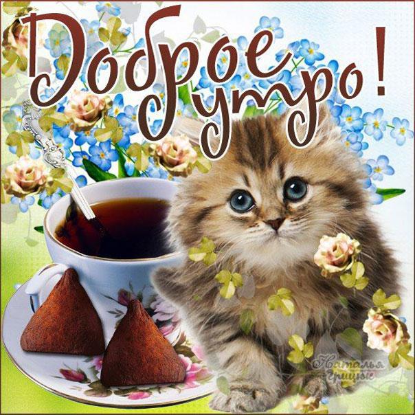 Доброе утро пожелание чай и котик