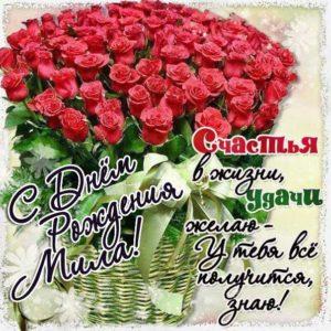 Мила c Днем рождения открытка. Розы, букет роз, подарок, красивая надпись, со стихом, мигающая, картинки, большой букет, шикарные розы, Милочка, поздравление, картинка.