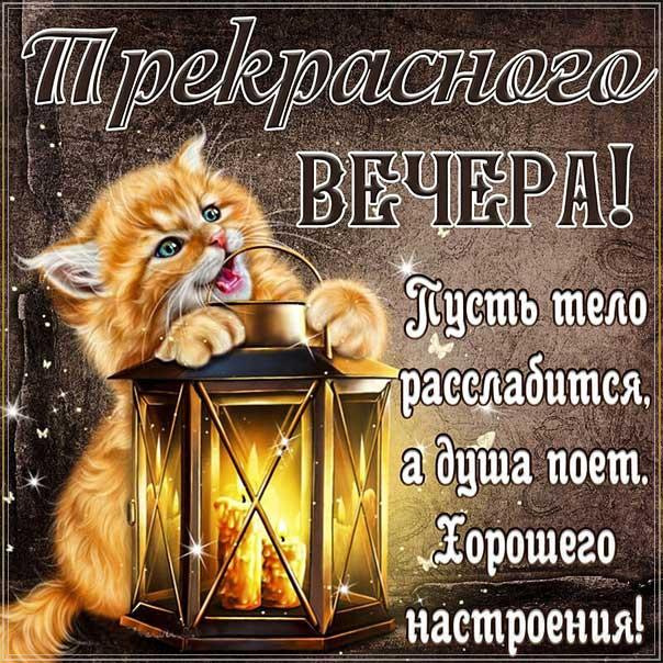 Приятного вечера, романтического вечера, прекрасного вечера, релакс вечером, доброго вечера, котик