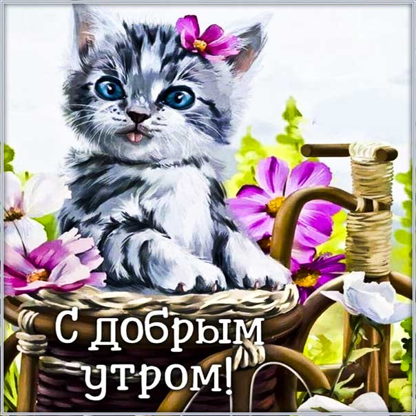 Веселая картинка с добрым утром. Удачного дня, с надписью утро, фразы доброго утра, котенок, цветы, текст про утро, красивая картинка.