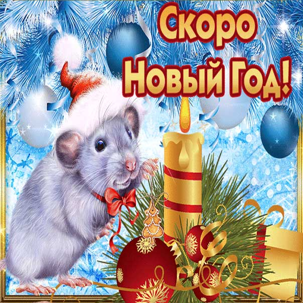 Скоро новый год картинки. Белая крыса, год крысы