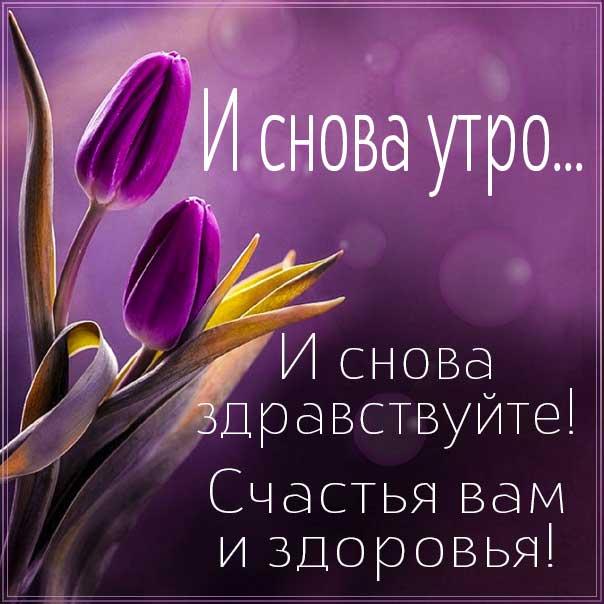 доброе утро, с добрым утром, утренний позитив, чудесного настроения, про утро картинка, утро с тюльпанами, приветствие утреннее