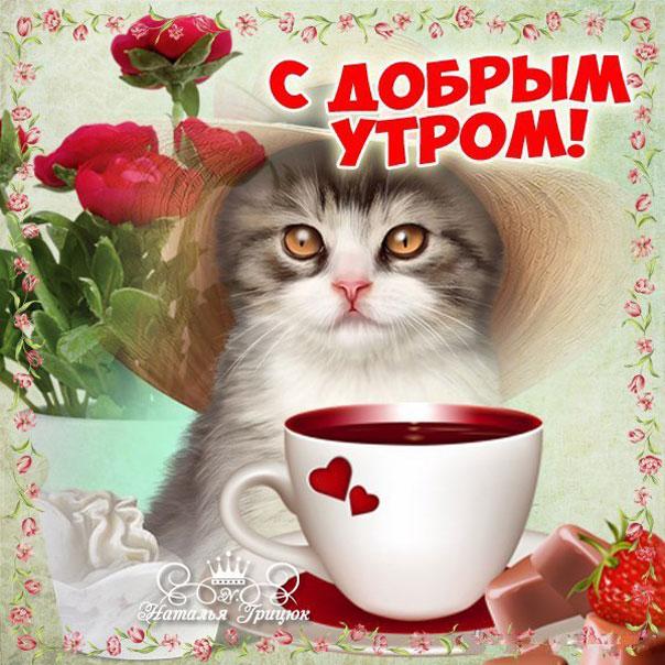 Красивые открытки с котятами с добрым утром