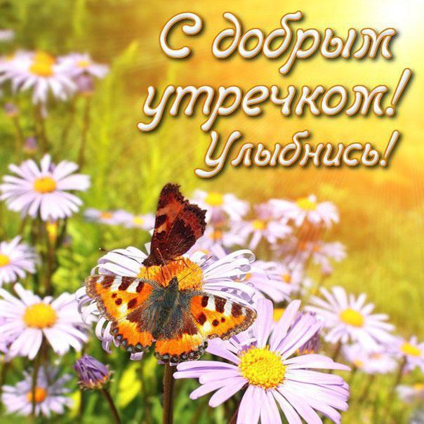 Картинки утро цветы