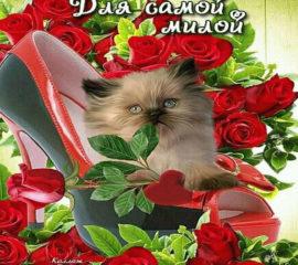 Душевные открытки хорошее настроени